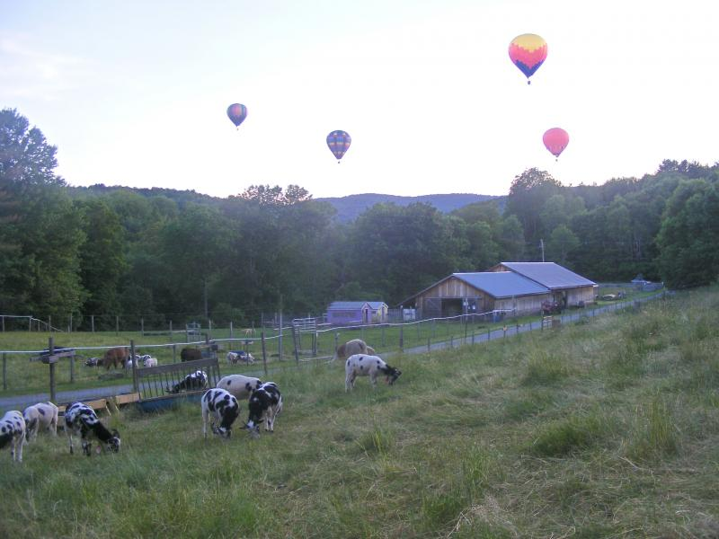 view of farm from hilltop jacob sheep, barn, hot air balloons