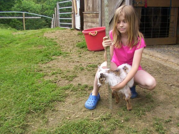 Companion goat with child