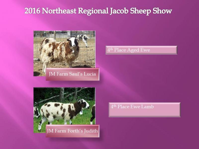 J & M Farm - Jacob Sheep Awards