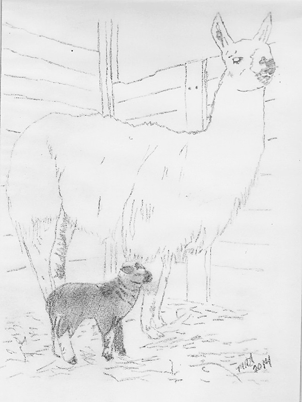 cherish and gentle ben guardian llama